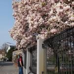 walking around Bramsche