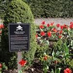 Blarney Castle - Poison garden