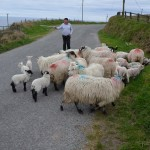 Co. Cork - the nice man who let us get a picture with one of his sheep