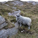Co. Cork - we saw animals in the most hard to get to spots.. sheep on nearly vertical hill sides...