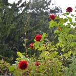 flowers on the Philosophenweg