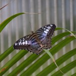 Landesgartenschau - butterfly garden