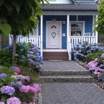 My German teacher's neighbor - I probably like it so much because it reminds me of a house back home.. plus the hydrangeas are amazing!