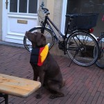 more World Cup fever - this time on a dog (which Morgan wanted to steal)